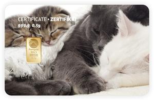 Tarjeta ORO regalo Katzen-mehrere PIM