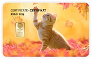 Tarjeta ORO regalo Katze-alleine PIM